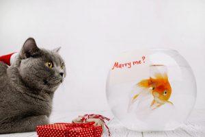 venda casada